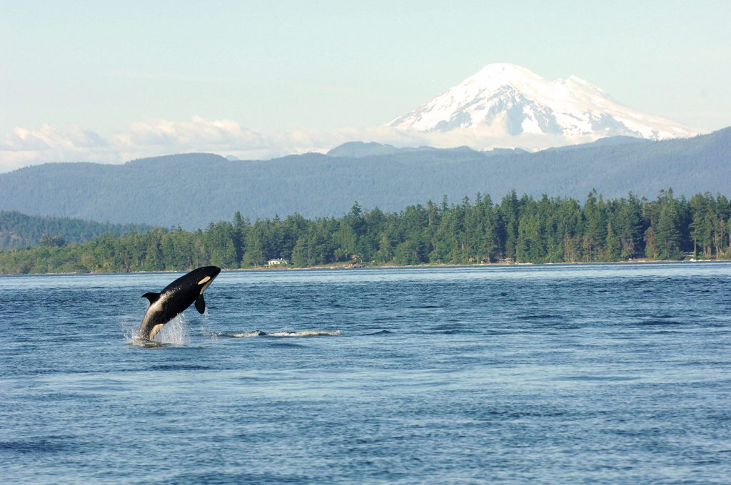 The Incredible Wildlife Of Puget Sound